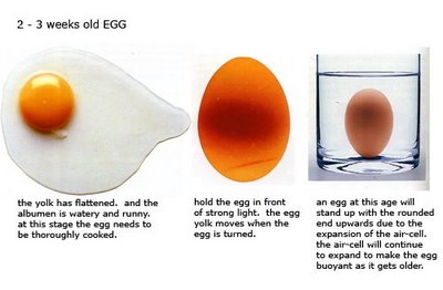 [Two Week Old Egg Using The Buoyancy Test]